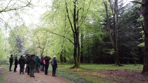 Looking for the Wood Warbler (Val Hodgeson)