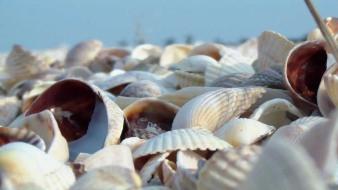 shells shellness